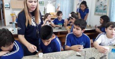 5ºs anos: Testando a presença do amido nos alimentos