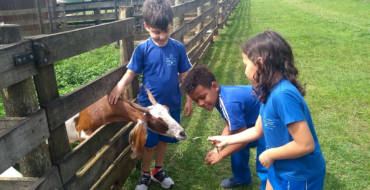 Sítio Paraíso: Saída pedagógica com os 1ºs anos